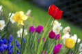 Colorful_spring_garden small.jpg