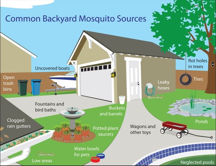Common Backyard Mosquito Sources